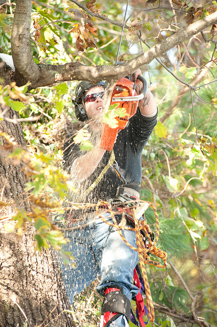 Tree Pruning O'Connor
